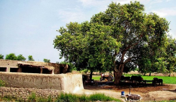 Villages losing their aura zameen blog for Gardening tools karachi