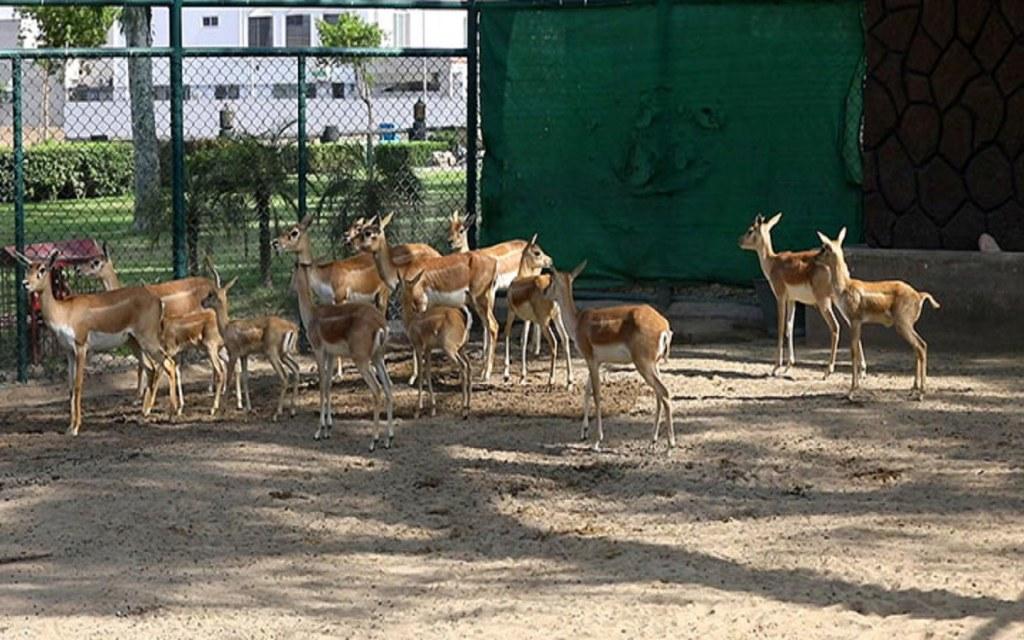 Citi Housing Gujranwala has a zoo inside the society