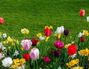 A garden full of flowers