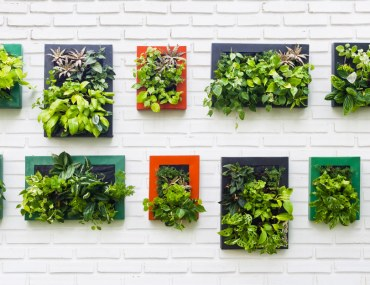 vertical garden indoor plants on white brick wall