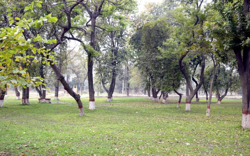 Changa Manga that is a manmade wildlife reserve