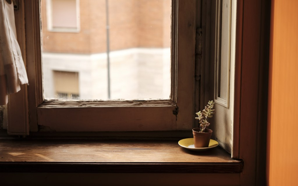 Potted plant next to big wooden window