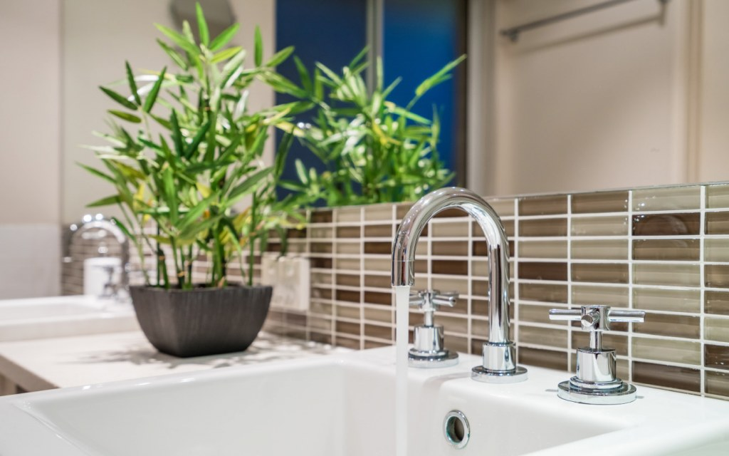 Small bamboo plants sits on a bathroom counter