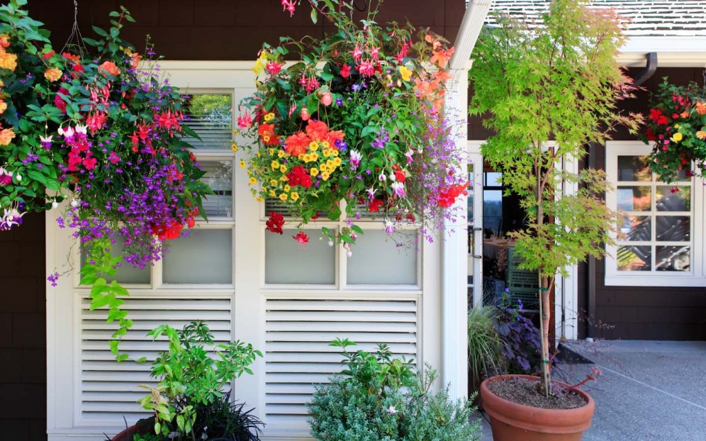 flowers hanging outside the window of a house