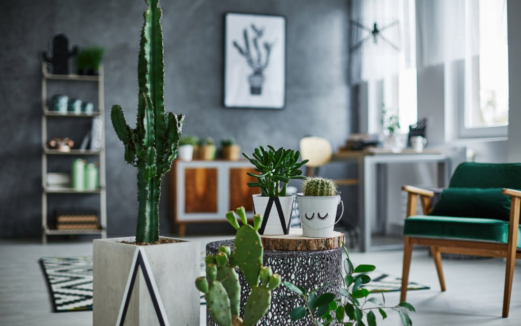 Modern room with cacti decorations indoor plants