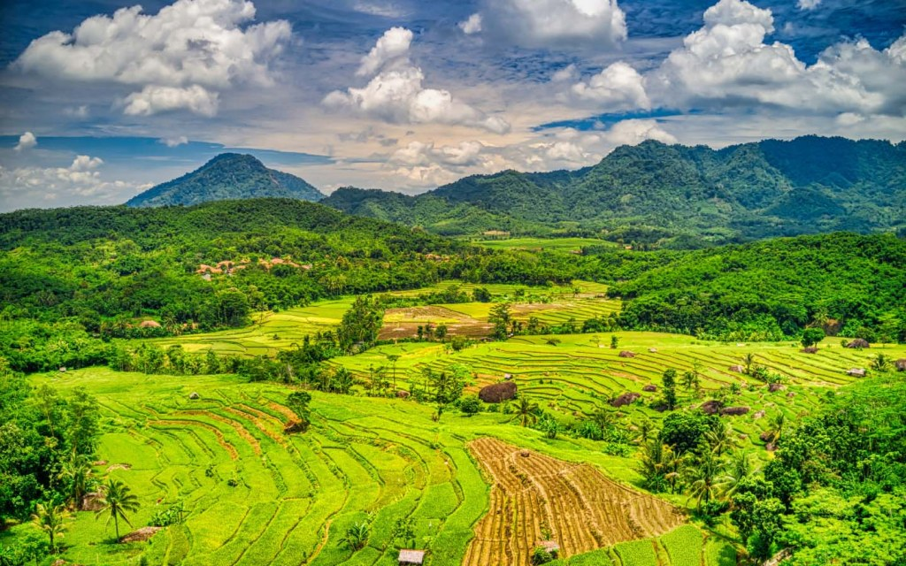 Green fields of Indonesia