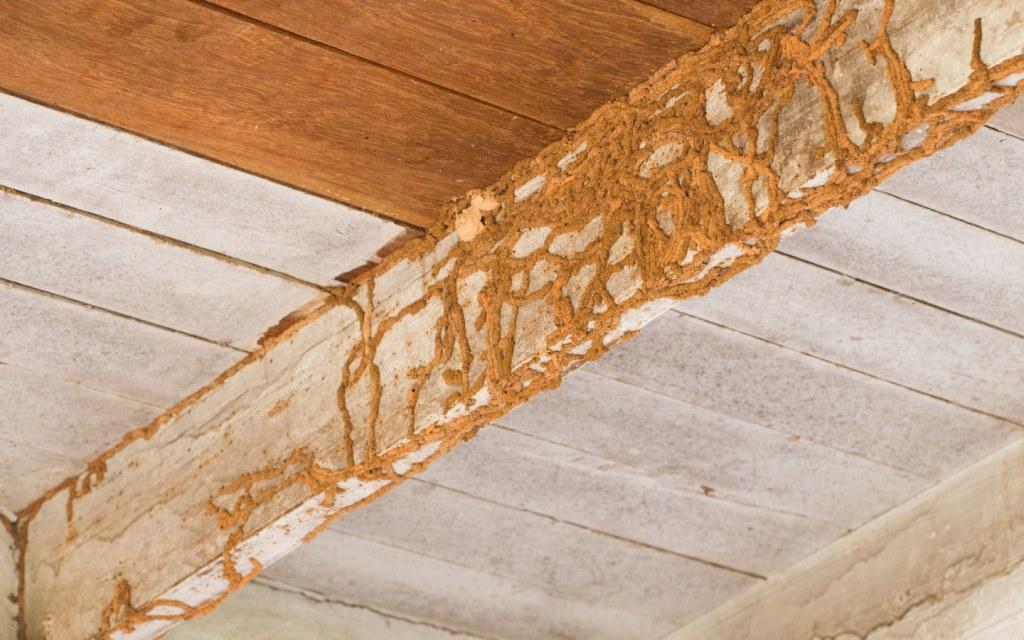 termite infestation wooden ceiling