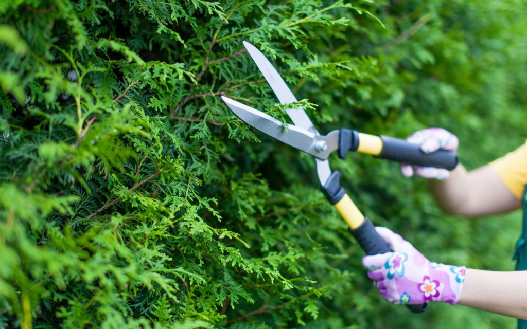 Do not prune your plants during a heat wave