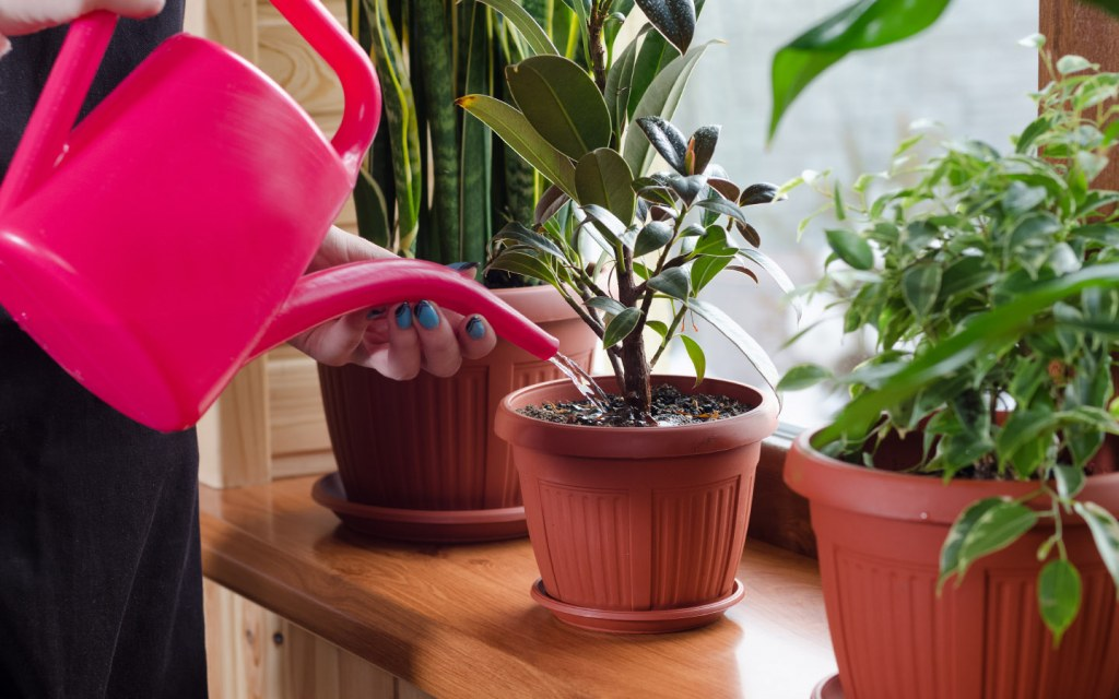 Create a cool environment for your plants this summer