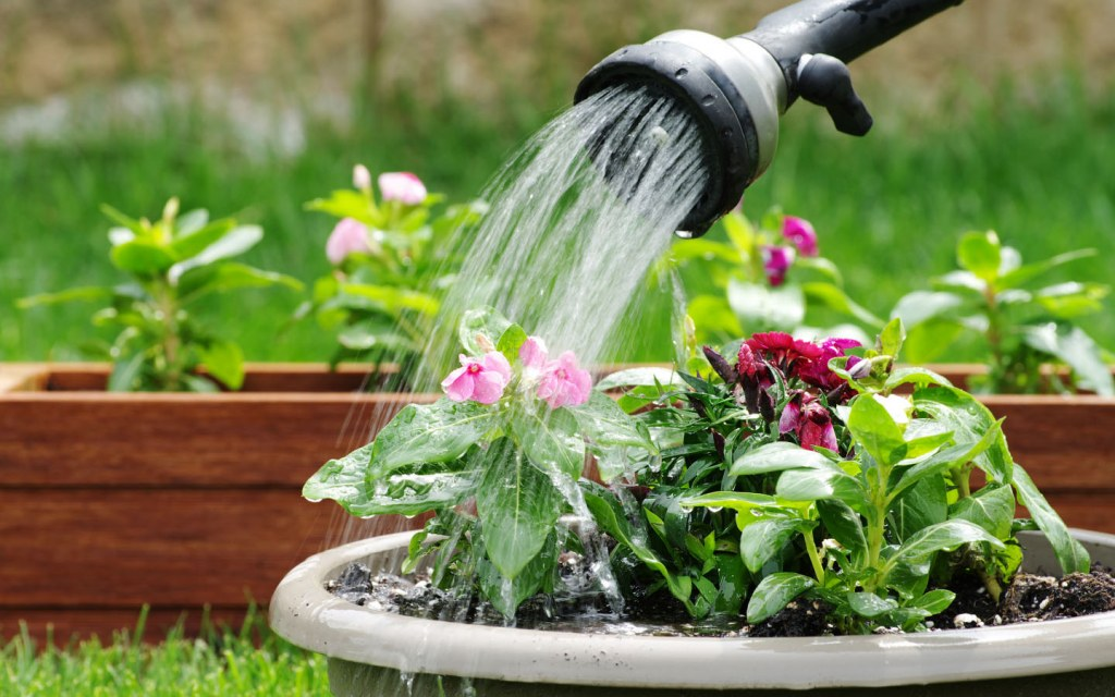 An effective tip in taking care of your plants in summers is to not over water the plants