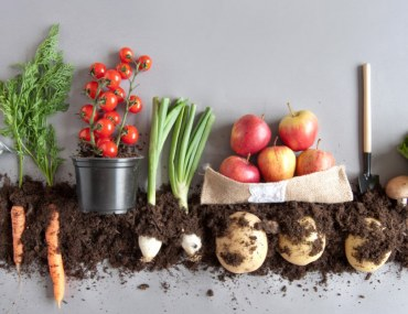 Make a compost at home