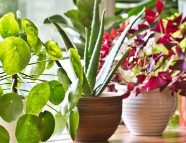 Indoor Plants near Windowsill