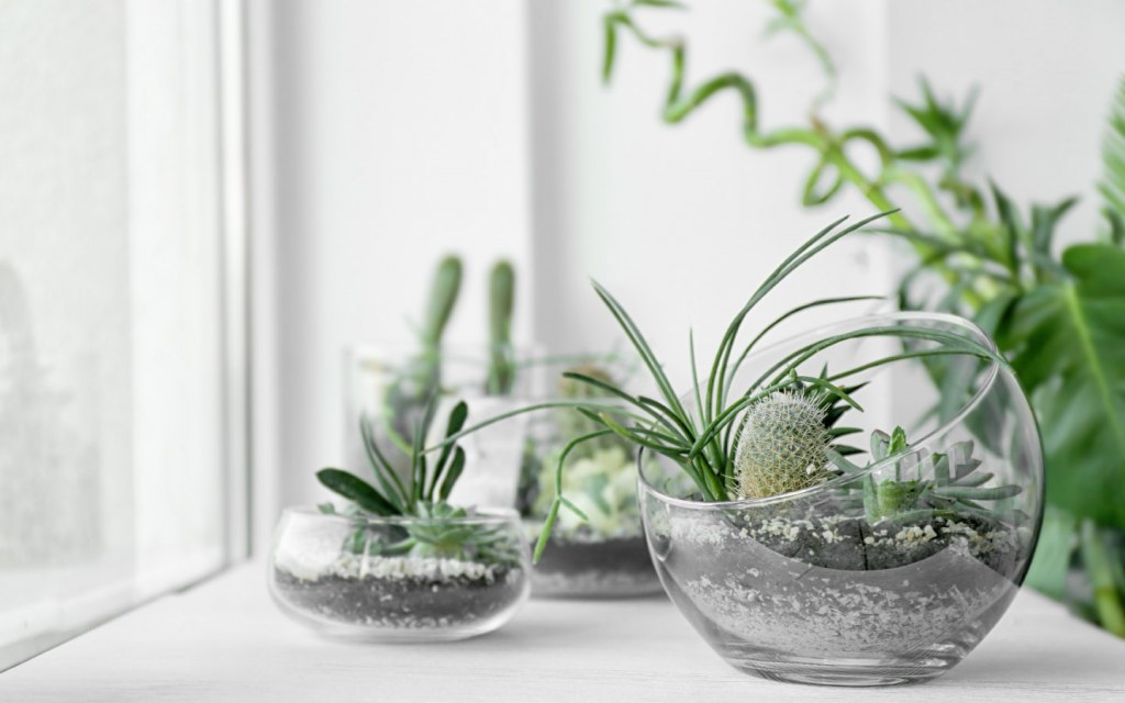 An easy home decorating hack for renters is to add plants