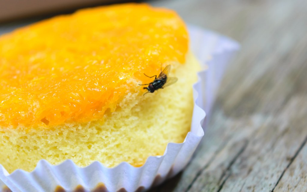 Houseflies can transfer a lot of germs onto your food with their legs