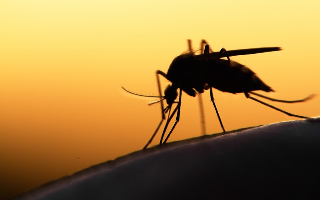 Some human odours are very attractive to mosquitoes
