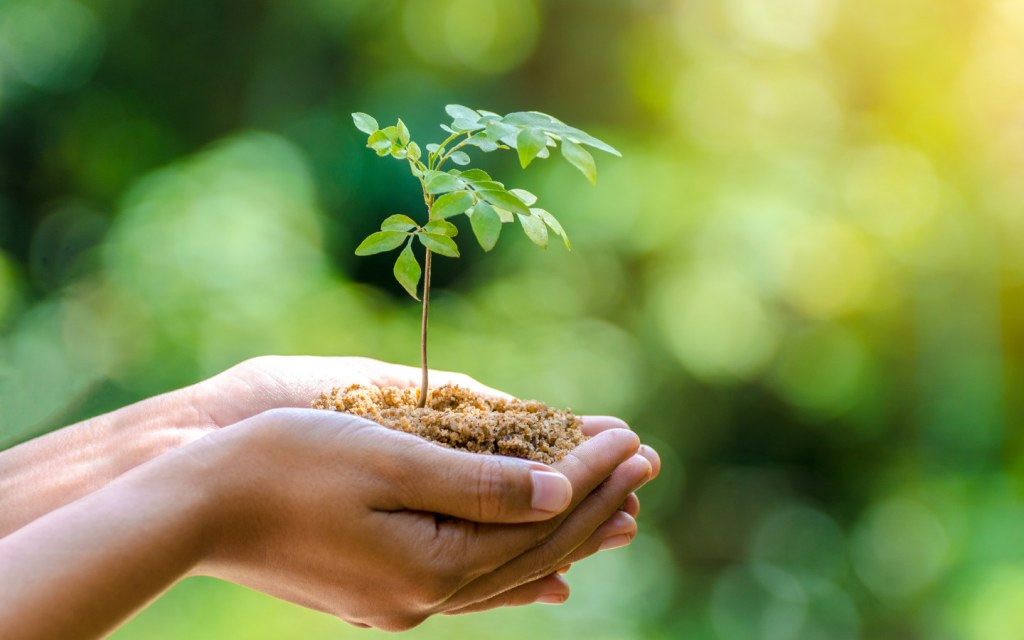 Plant a tree to fight climate change