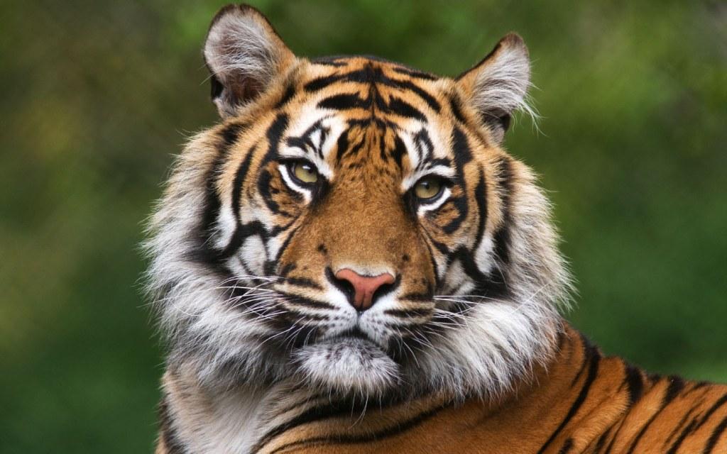 Lahore Zoo Safari Park