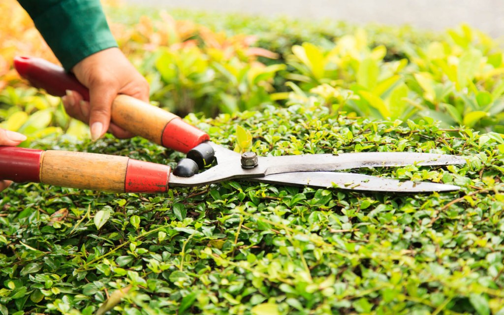 Keep your garden well-maintained to boost its appeal
