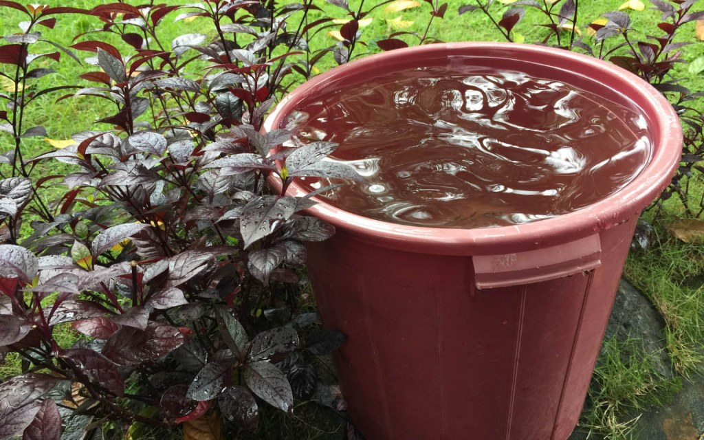 Tips to conserve water at home by storing rain water in a bucket