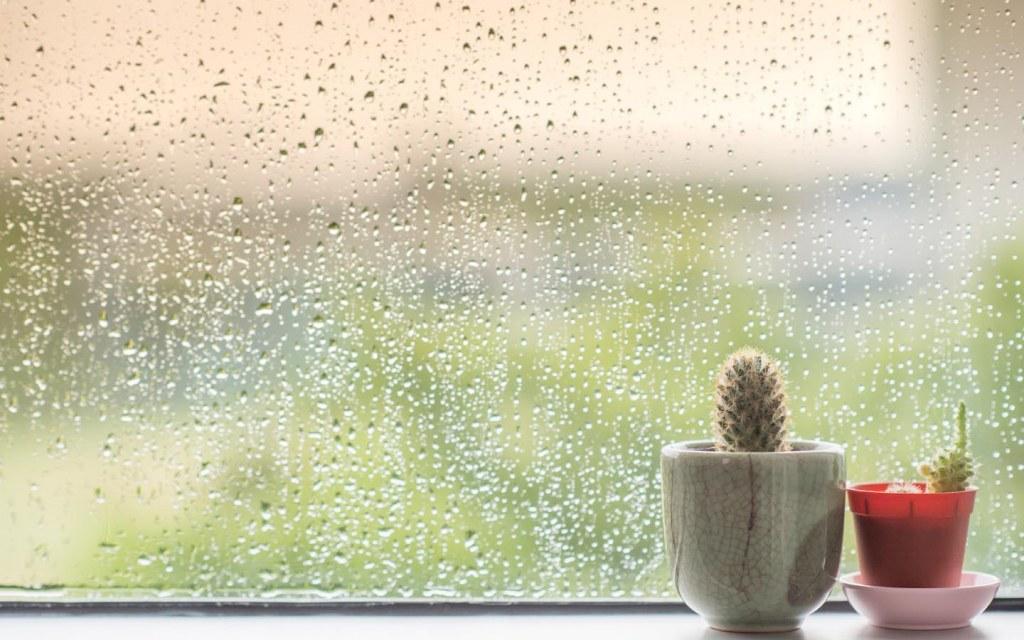 precautions to be taken during the rainy season