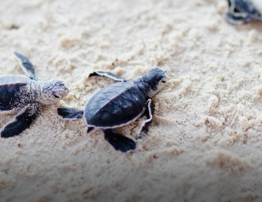 Turtle Beach in Karachi