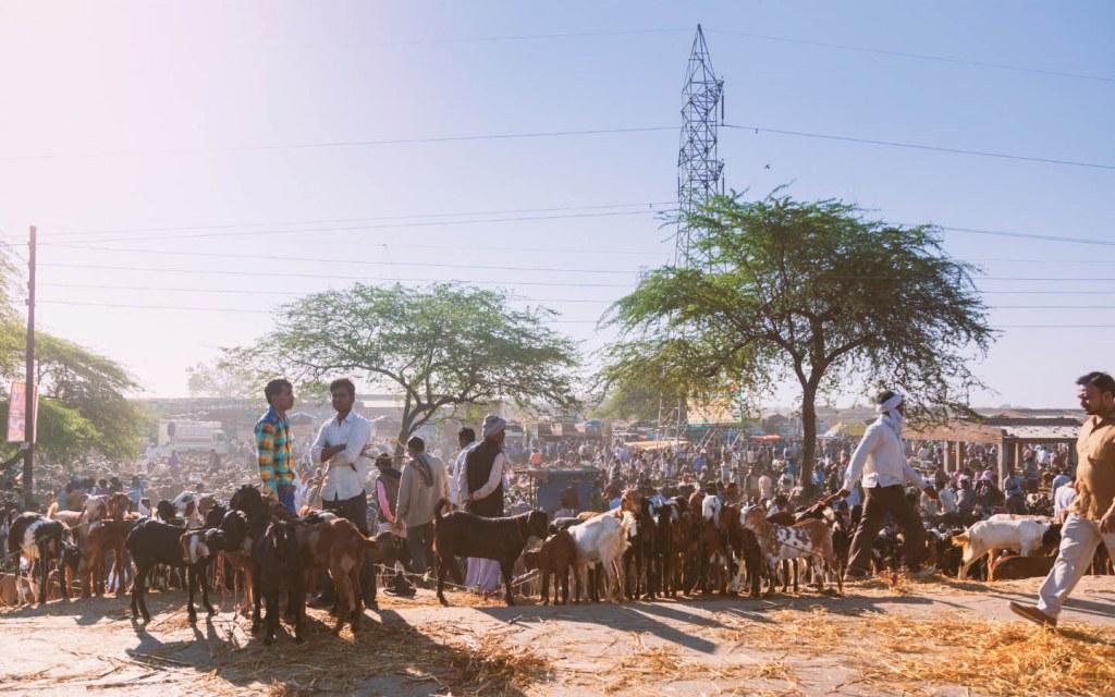 Indian Muslims generally sacrifice goats or sheep for Eid ul Adha