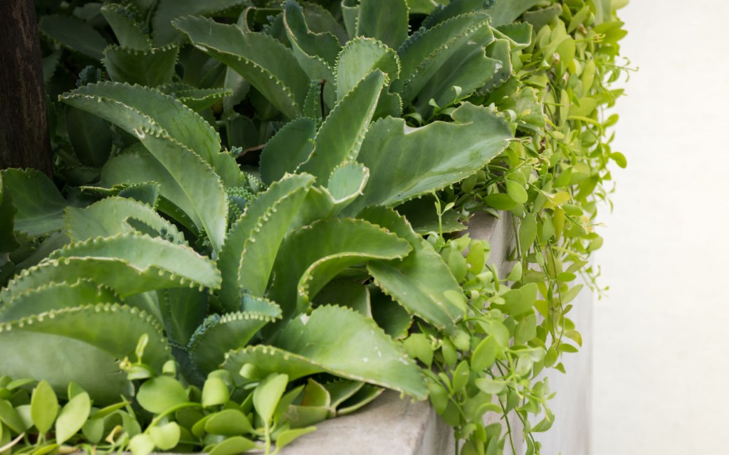 Keep your rooftop garden in Pakistan greener by choosing native plants