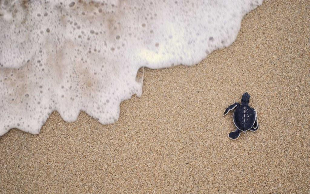Turtle Beach in Karachi: Activities, Rental Huts & More! | Zameen Blog