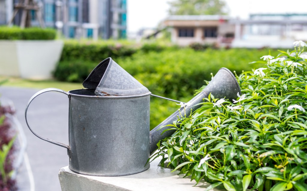 Water your plants regularly to keep them healthier
