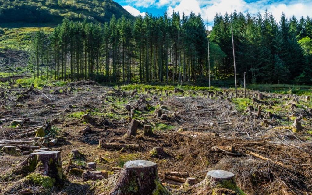 deforestation in Pakistan