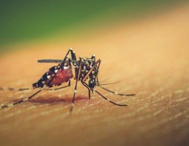 make your home dengue free