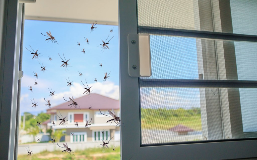 Keep mosquitoes away and seal all entry points