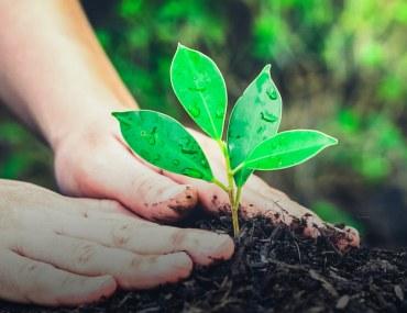 LDA is raising a forest in Lahore using the Miyawaki Method