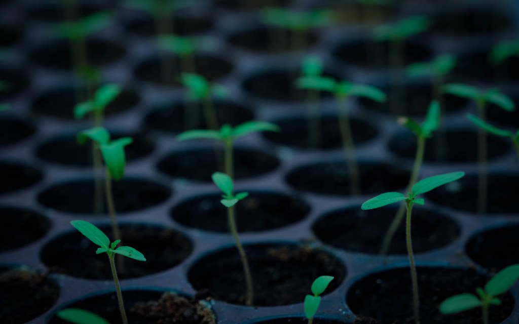Forests risen with Miyawaki method grow 10 times faster