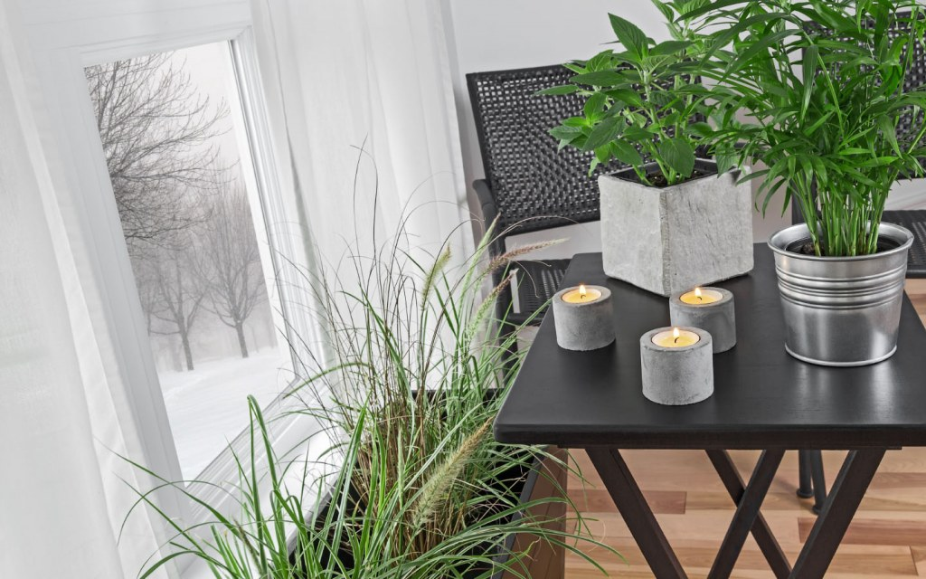 Beat winter blues with green indoor plants