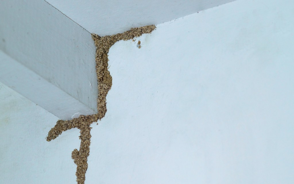 Basements can be susceptible to pest infestations if care is not taken