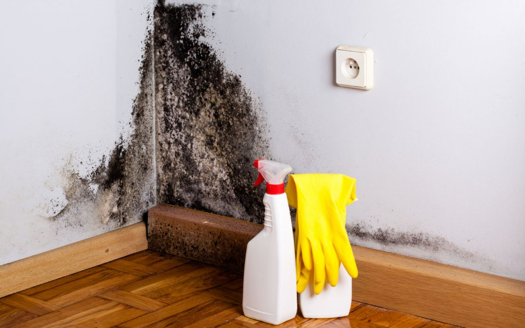 Mould infestation can turn off home buyers