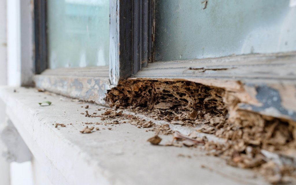 Wooden window frames are generally more prone to pest infestations