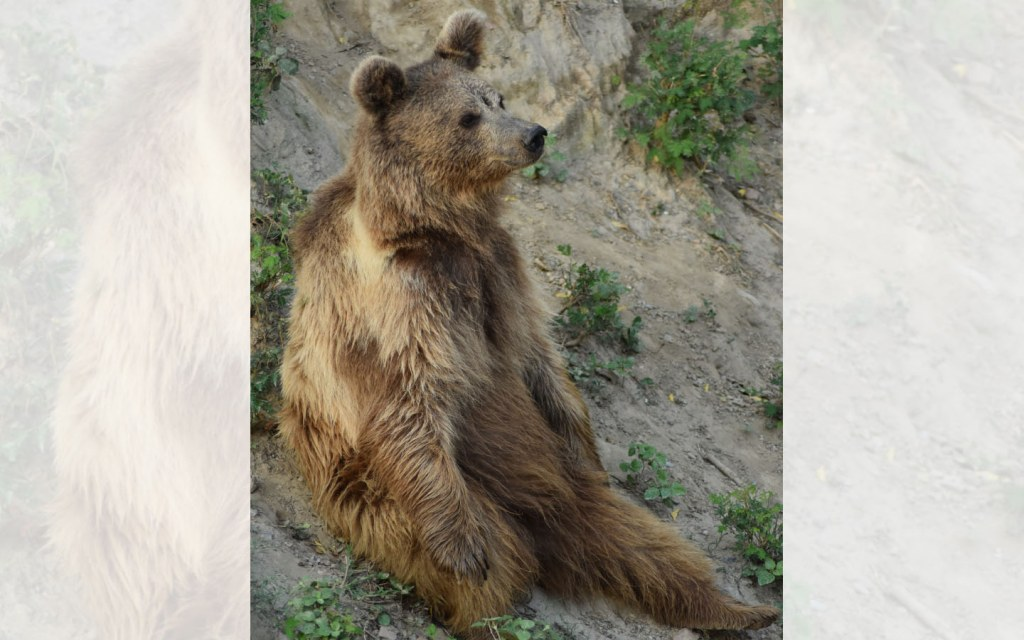 Deosai National Park is home to the endangered Himalayan Brown Bear