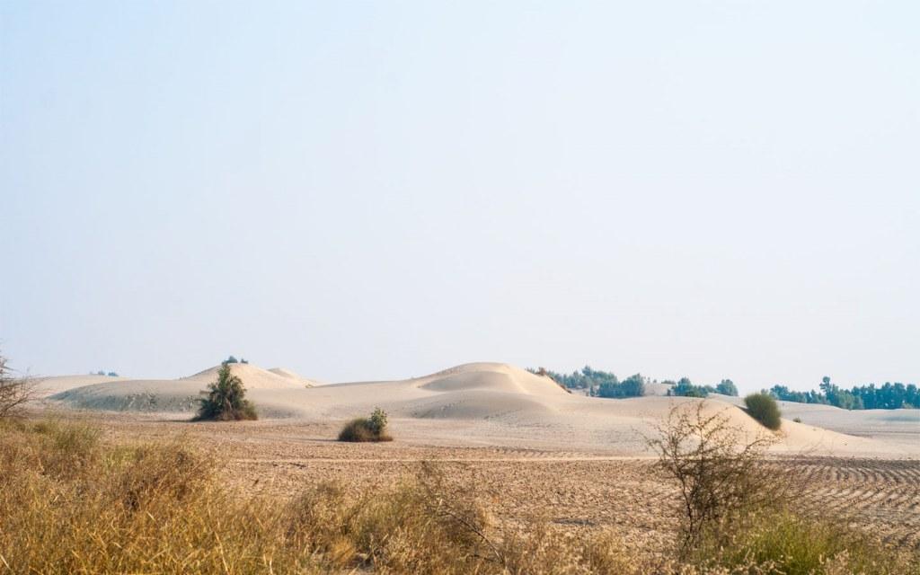 vegetation in Pakistan's deserts
