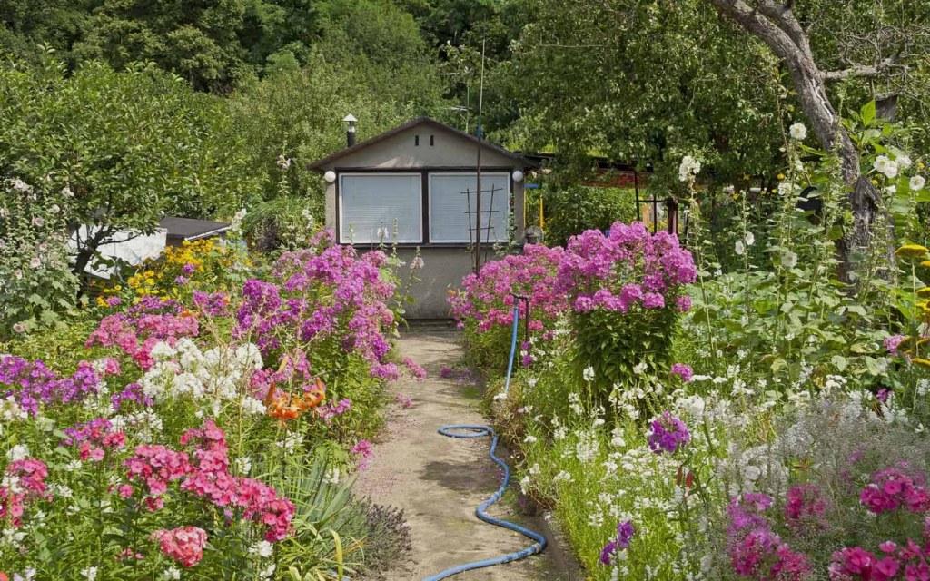 Use Plants to Enhance Natural Beauty