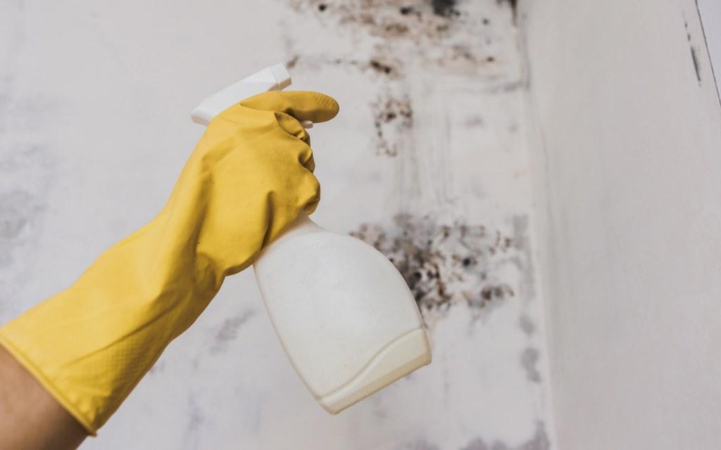 how to kill bathroom mould