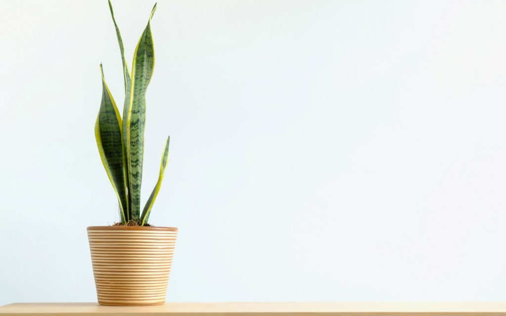 Clean the air in homes using indoor plants