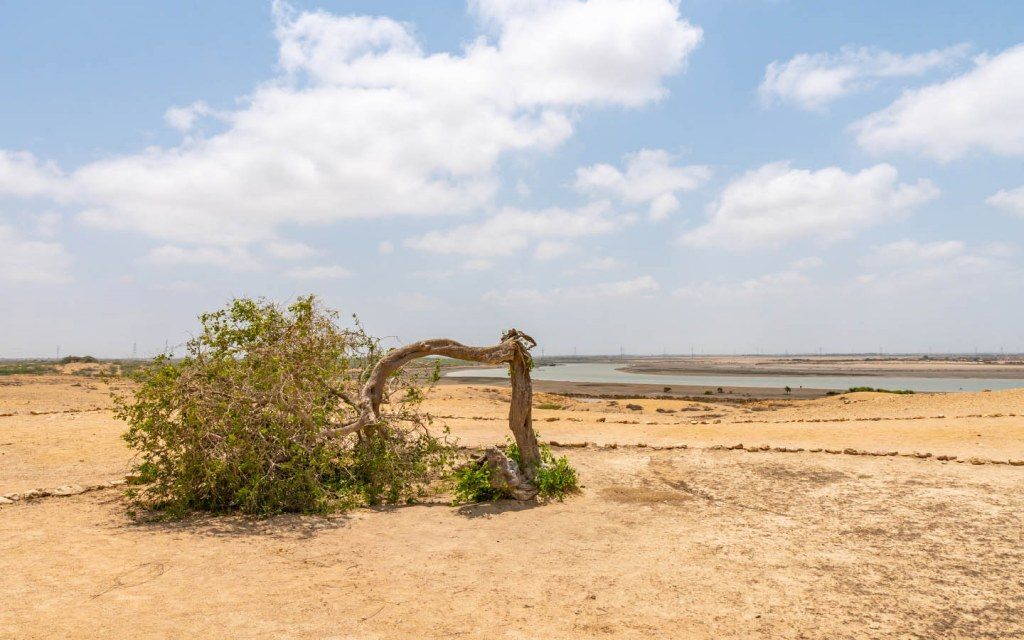 A bent tree in Bhanbhore