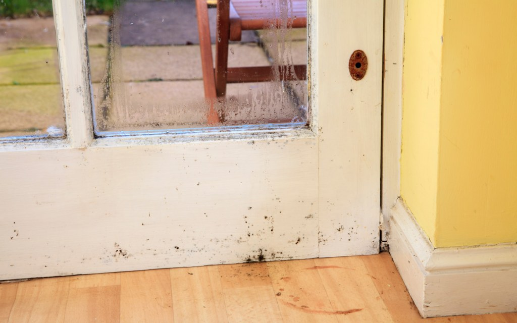 How to Spot Mould in Your Bathroom