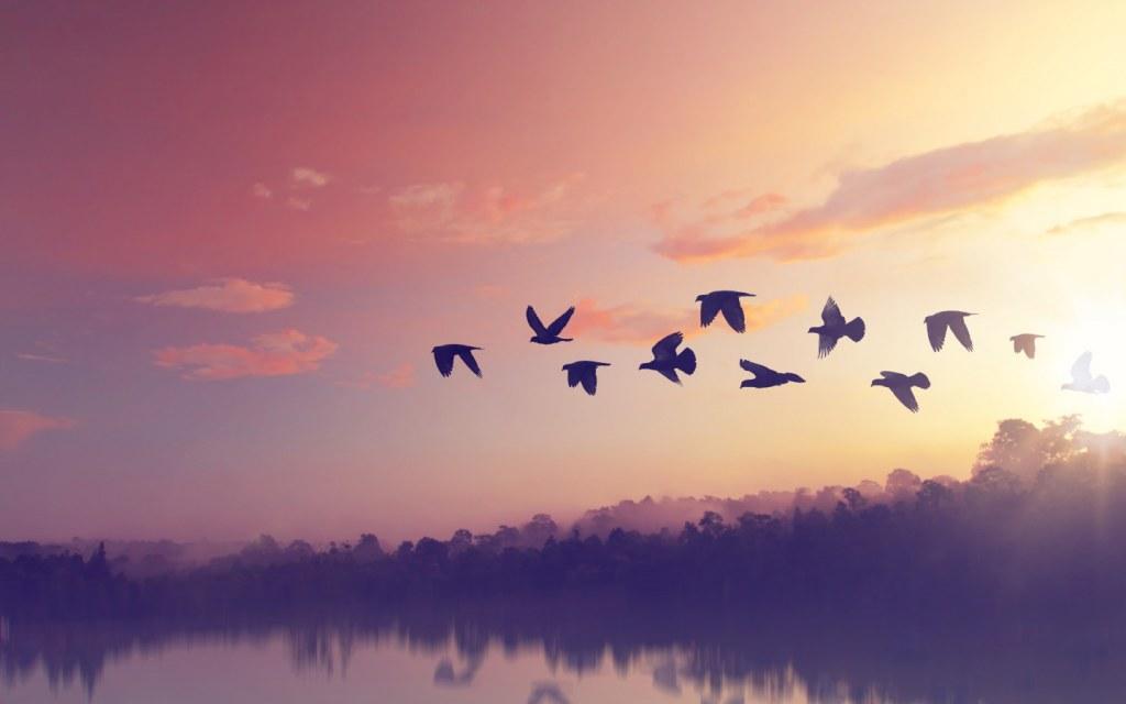 Enjoy bird-watching at Rawal Dam Park