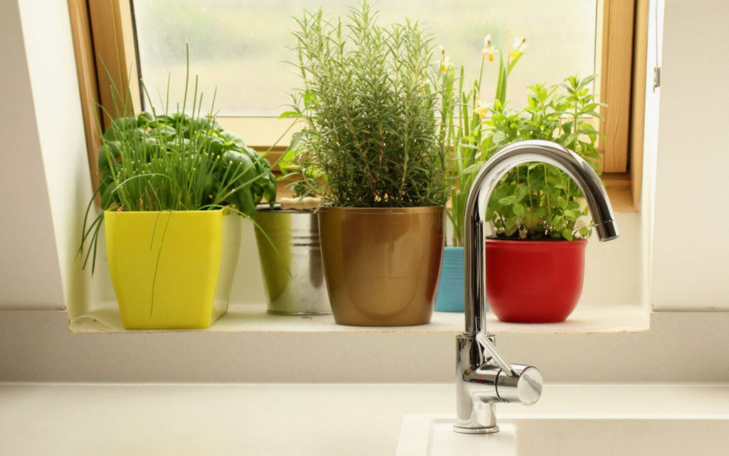 Potted plants in kitchen