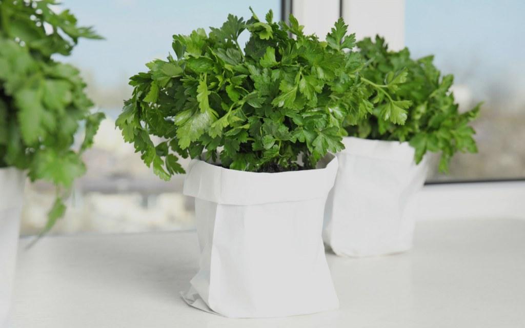 Grow a herb garden in your kitchen window