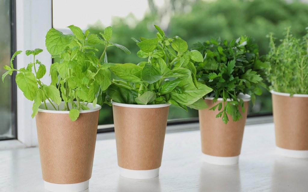 Grow a herb garden in the window