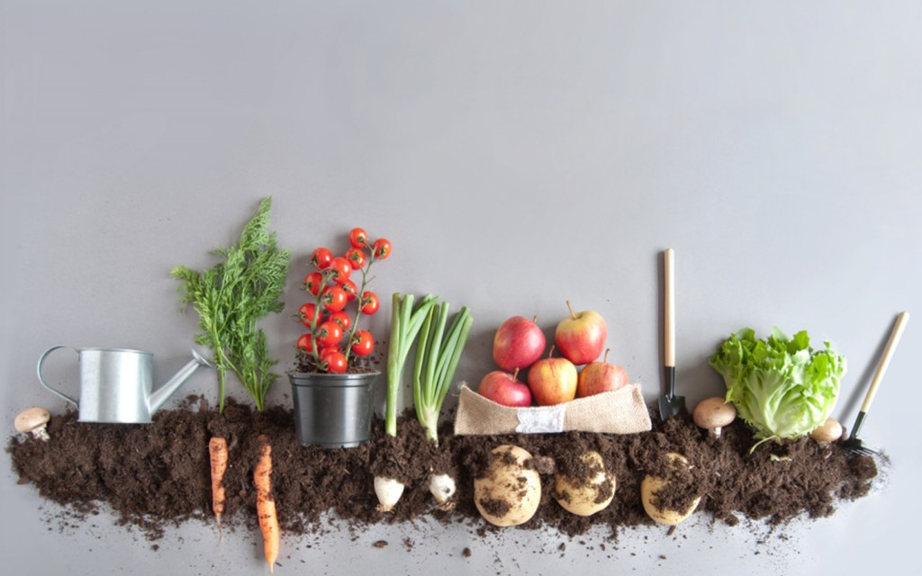 Make a compost from throw away kitchen items